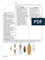 Social Organization in Termite