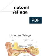 tht telinga anatomi