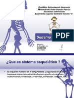 Sistema Esqueleticosistema Esqueletico