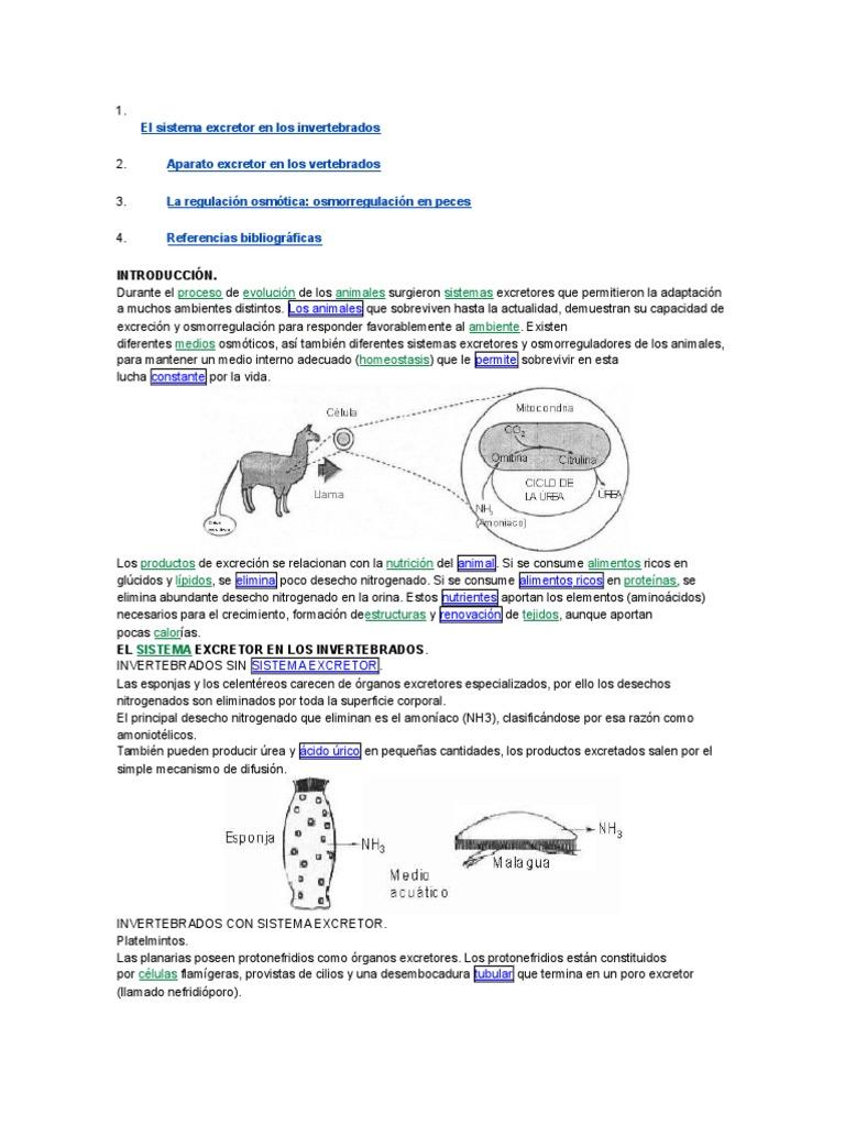 El Sistema Excretor en Los Invertebrados