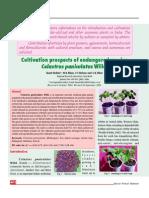 Cultivation of Celastrus Paniculatus