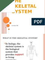 The Skeletal System Ppt