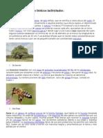 10 Ejemplos de Factores Bióticos Individuales