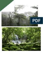 la selva.docx