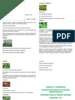 Plantas Medicilanes
