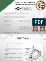 desviaciones septales.pptx