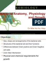 2. Bacterial AnP