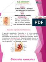 Apa. Reproductor Femenino