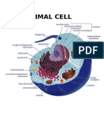 Picture of Cells