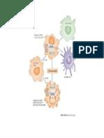 Mecanismo de supressão MDSCs