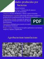 tema7 agrobacterium