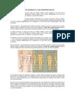 Canon Del Cuerpo Humano y Las Proporciones