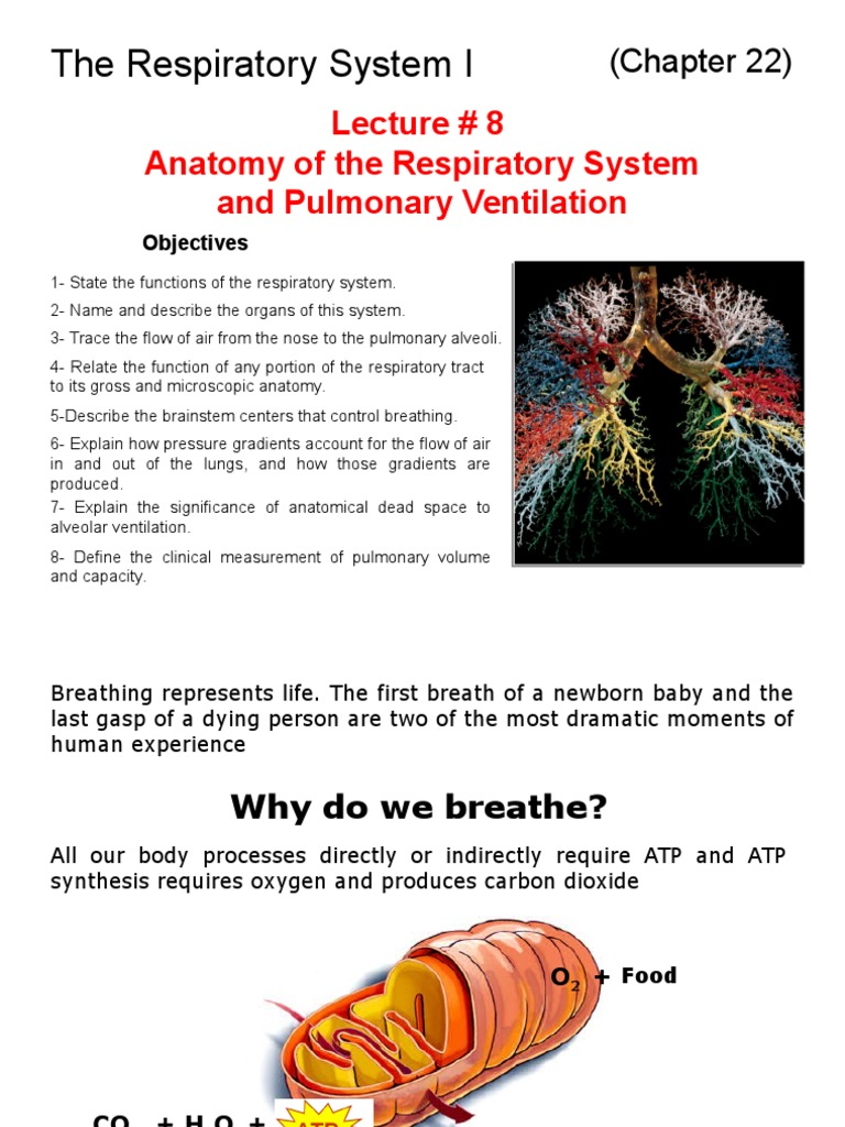 the Respiratory System 1 | Exhalation | Lung