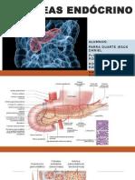 Páncreas endócrino