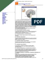 A Glândula Hipófise Ou Pituitária - Funções, Saúde e Exercícios