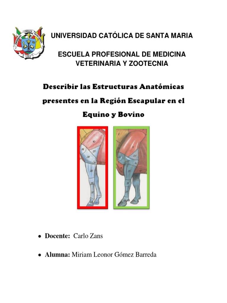 Anatomía comparativa de la región escapular en Equino y Bovino