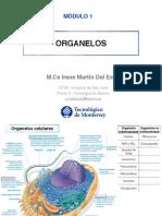 Tema 1.1 - Organelos(2)