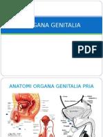 Organ Genetalia