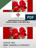 EXPORTATION DE ROSES AUX PAYS-BAS