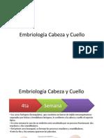 Embriologc3ada Cabeza y Cuello