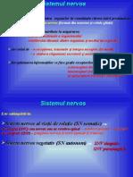 Anatomia omului - Sist Nervos