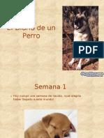 Diario de Un Perro Diapositivas