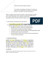 11 FORMA DE REPRODUCCION EN BACTERIA Y HONGOS.docx