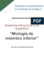 Miologia de Miembro Inferior