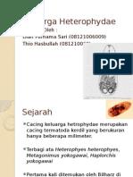 heterophyidae