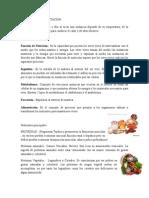 PROCESO DE ALIMENTACION.docx