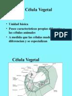 Celula Vegetal