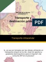 Transporte y destinación Proteica