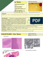 Sarcocystis suihominis