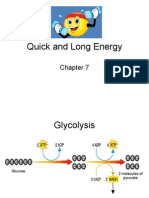 Energy and Cell Resp Quick and Long Energy Part 3 REVISED