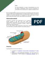 Matriz Mitocondrial