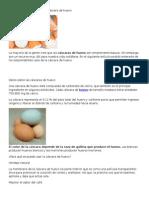 17 Sorprendentes Usos de La Cáscara de Huevo