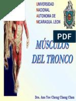 Músculos Del Tronco