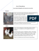 Aves Domesticas