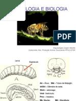 Morfologia abelha