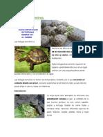 consejos basico de tortugas de tierra.docx