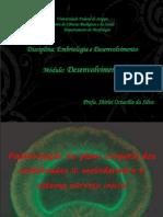 EmbDes4 Med Mesoderme SNinicial