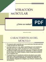 contraccion muscular2007