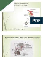 Funciones Reproductoras y Hormonales Del Varon-1