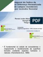 Série temporal do Índice de Vegetação por Diferença Normalizada em área de campos inundáveis atingida por incêndio florestal