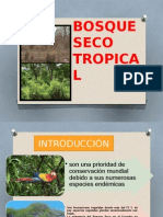 BOSQUE SECO TROPICAL.pptx