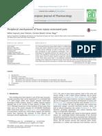 Peripheral mechanisms of burn injury associated pain