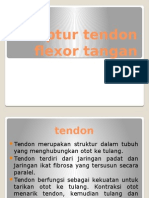 Ruptur Tendon Flexor Tangan Tutor Orto
