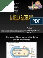 Clase 1 La Celula Bacteriana