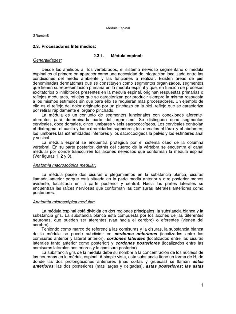 Famoso Anatomía Macroscópica De La Médula Espinal Ornamento ...