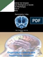 Telencéfalo1